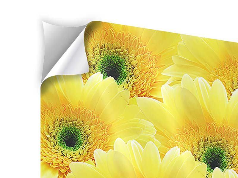 Klebeposter 4-teilig Flower Power Blumen