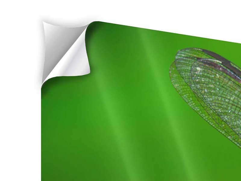 Klebeposter 4-teilig Die Libelle