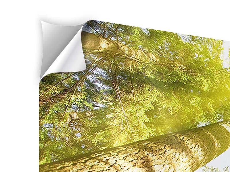 Klebeposter 4-teilig Baumkronen in der Sonne