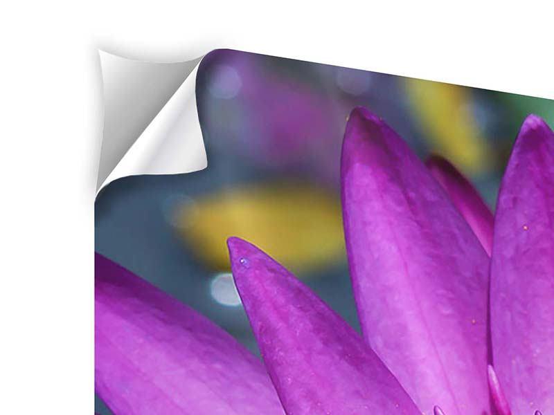 Klebeposter 4-teilig Makro Seerose in Lila