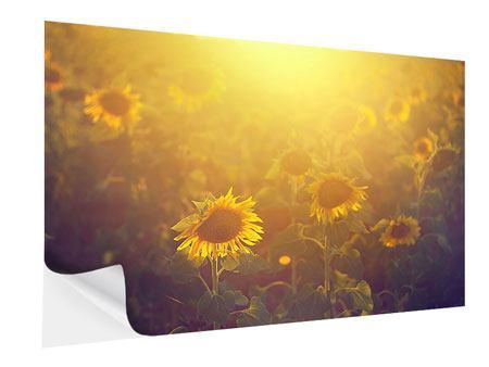 Klebeposter Sonnenblumen im goldenen Licht