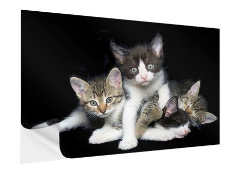 Klebeposter Katzenquartett