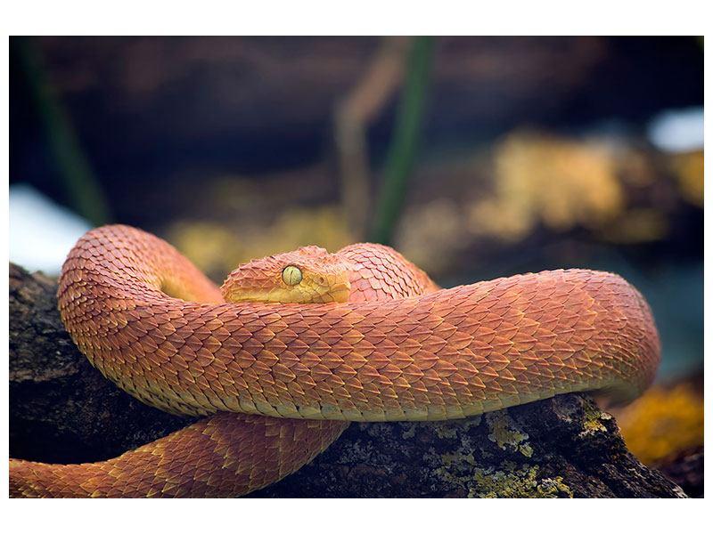 Klebeposter Schlange