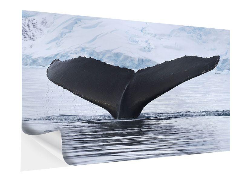 Klebeposter Der Buckelwal