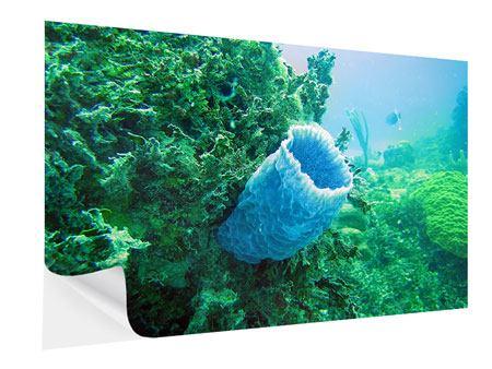 Klebeposter Korallen