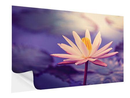 Klebeposter Lotus bei Sonnenuntergang