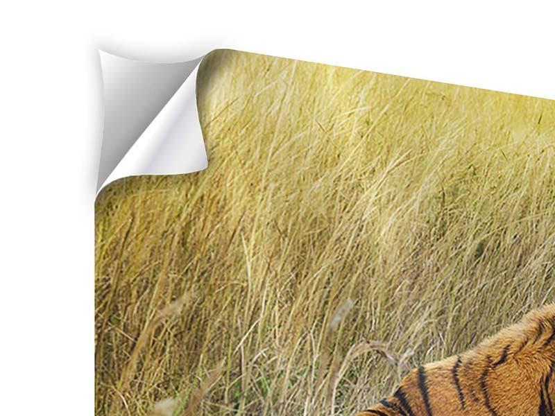 Klebeposter Der Tiger
