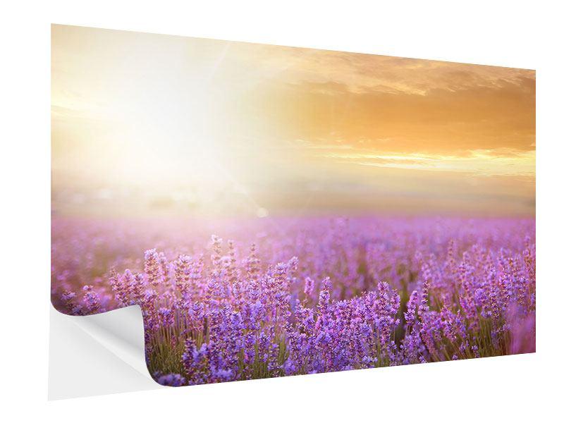 Klebeposter Sonnenuntergang beim Lavendelfeld