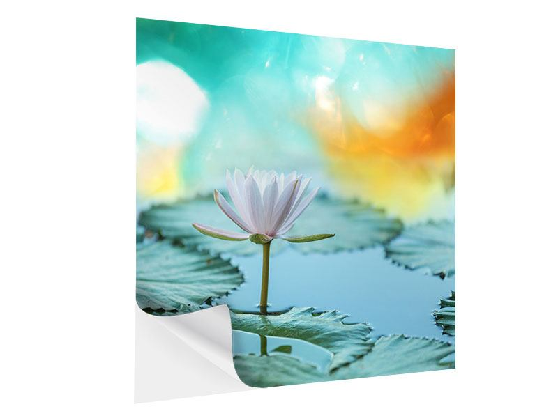 Klebeposter Verträumte Lotus