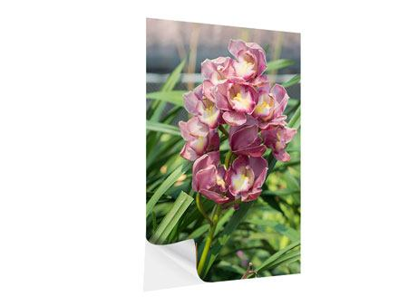 Klebeposter Wilde Orchideen