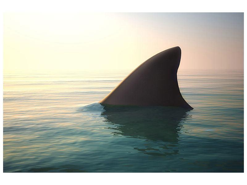 Klebeposter Haifischflosse