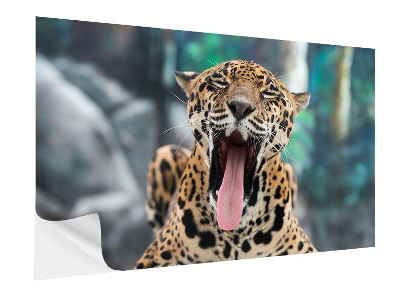 Klebeposter Leopardenkopf