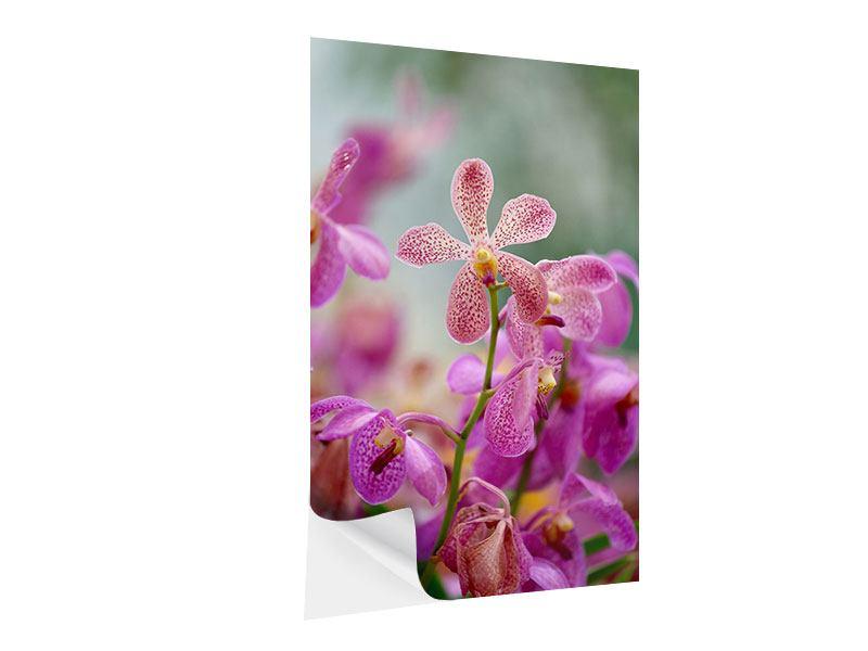 Klebeposter Orchidee Pünktchen