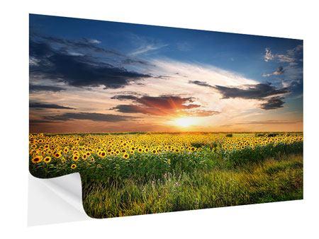 Klebeposter Ein Feld von Sonnenblumen