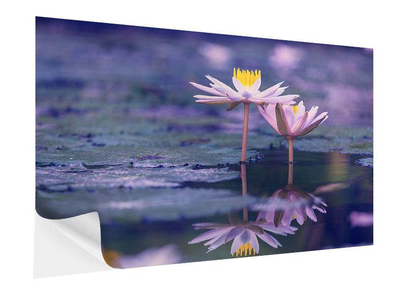 Klebeposter Lotus Duo im Sonnenaufgang