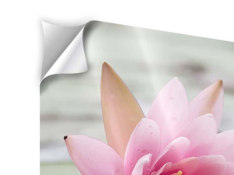 Klebeposter Lotus