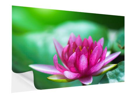 Klebeposter Lotus in Pink