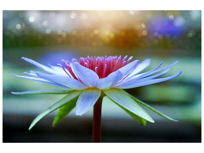 Klebeposter Pretty Lotus