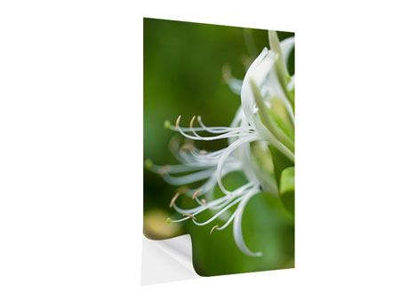 Klebeposter Makro Blüte