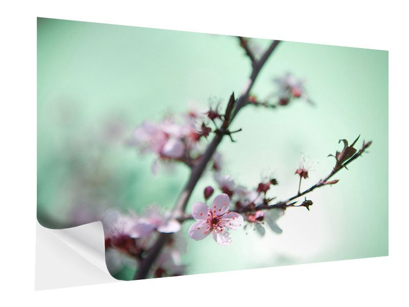 Self-Adhesive Poster Beautiful Japanese Cherry Blossom
