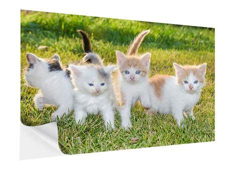 Klebeposter Katzenbabys