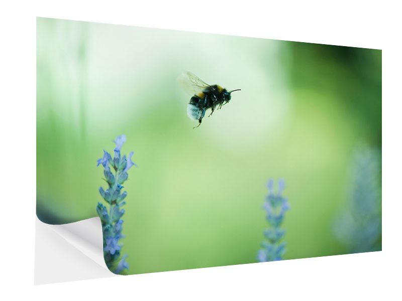 Klebeposter Die Biene