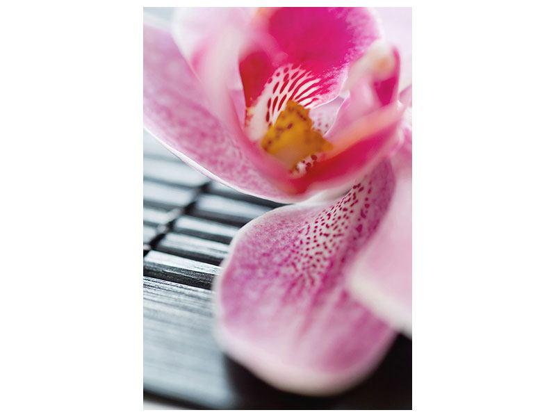 Klebeposter Close up Orchidee