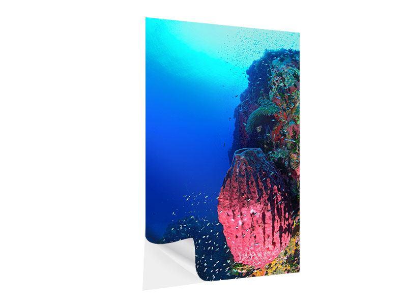 Klebeposter Unterwasserwelt