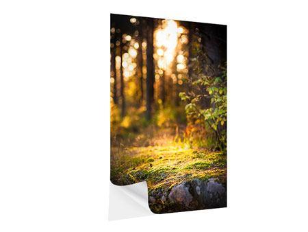 Klebeposter Der Wald im Hintergrund