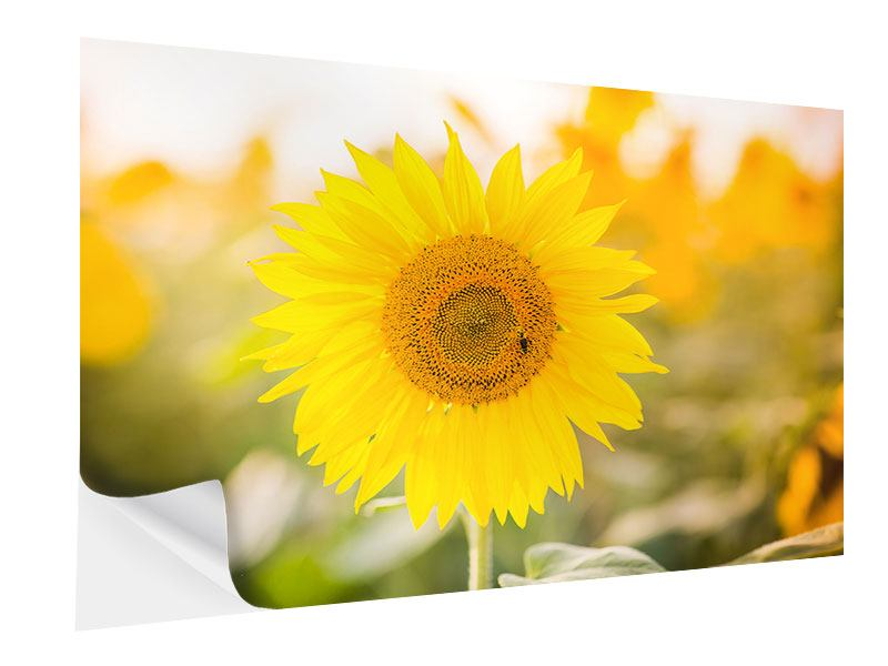 Klebeposter Sunflower
