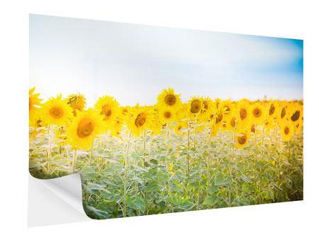 Klebeposter Im Sonnenblumenfeld