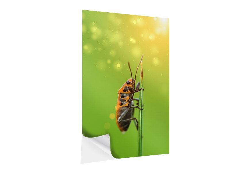 Klebeposter Das Insekt