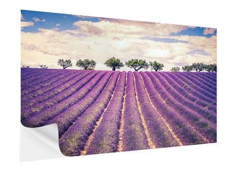 Klebeposter Das Lavendelfeld