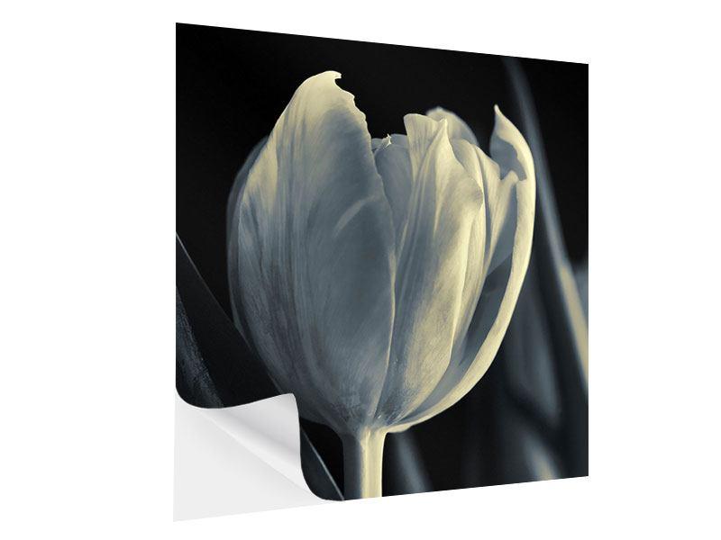 Klebeposter Schwarzweissfotografie XXL Tulpe