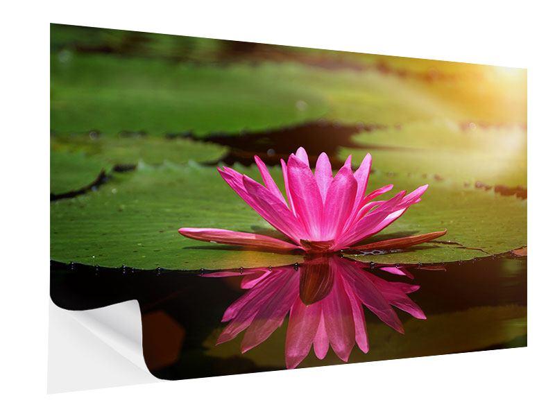 Klebeposter Lotus im Wasser
