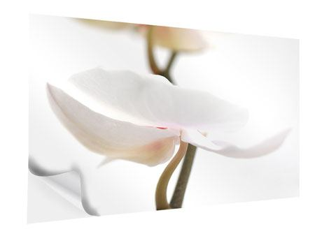 Klebeposter XXL Orchideenblüte