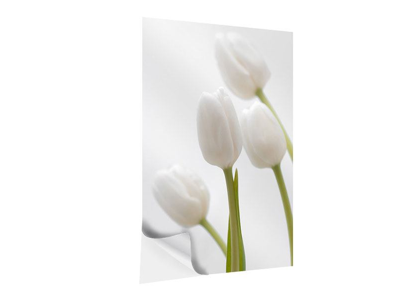 Klebeposter Weisse Tulpen
