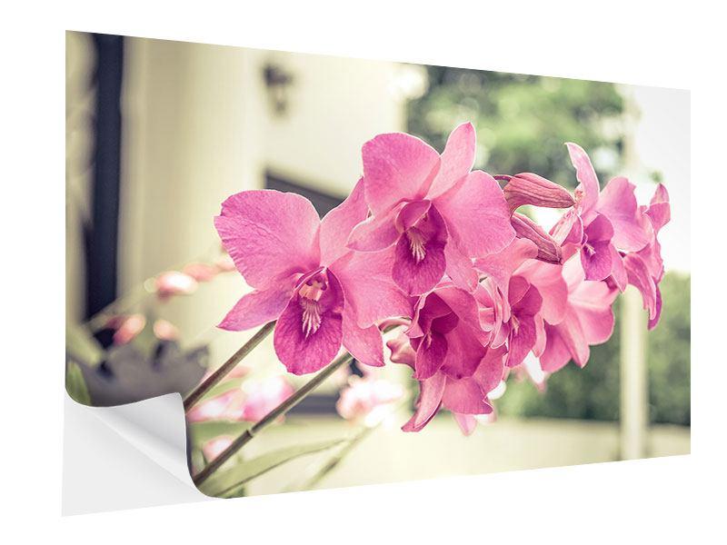 Klebeposter Ein Fensterplatz für die Orchideen
