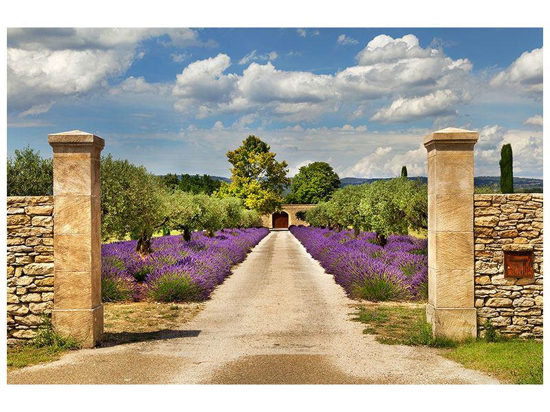 Klebeposter Lavendel-Garten