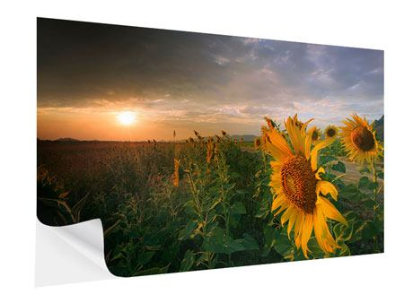 Klebeposter Sonnenblumen im Lichtspiel