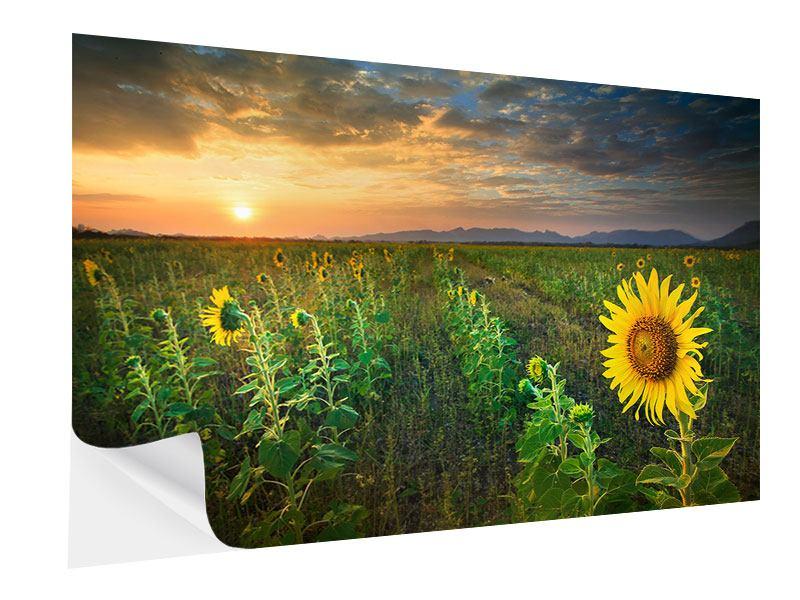 Klebeposter Sonnenblumenfeld im Abendrot