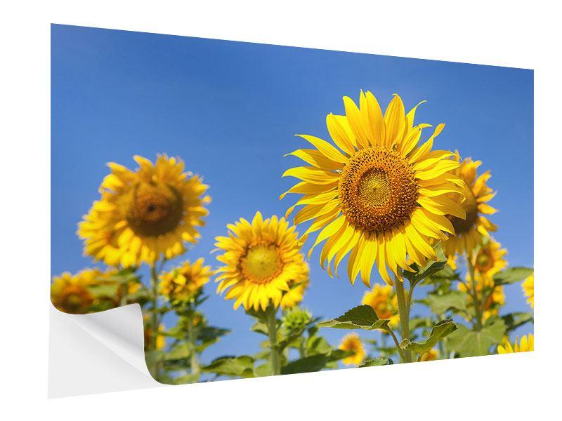 Klebeposter Himmlische Sonnenblumen