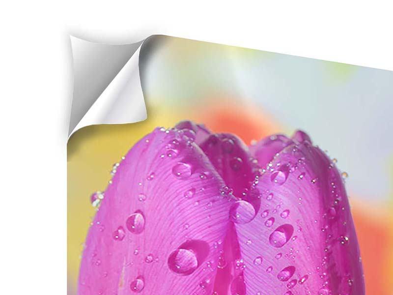 Klebeposter Die Tulpe im Morgentau