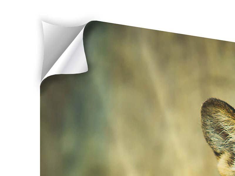 Klebeposter Pantherportrait