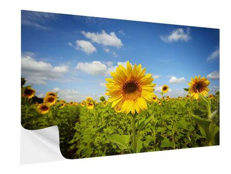 Klebeposter Sommer-Sonnenblumen