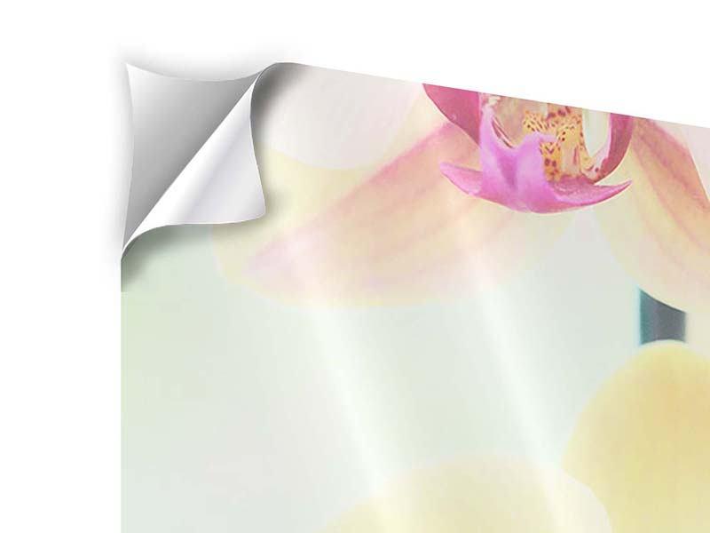 Klebeposter Lovely Orchidee