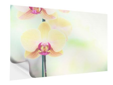 Klebeposter Lovely Orchidee