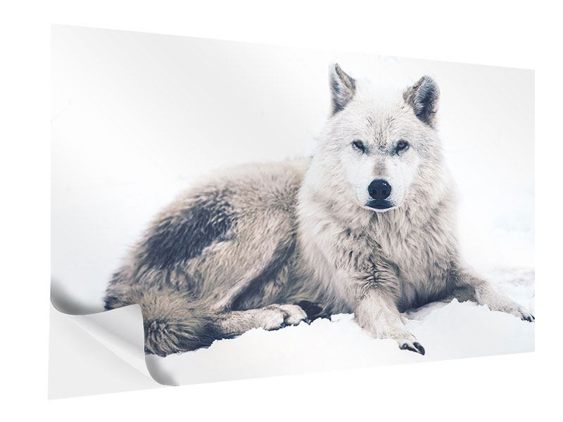 Klebeposter Der Wolf