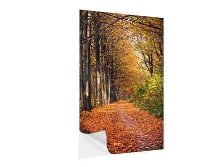 Klebeposter Laubwald im Herbstlicht