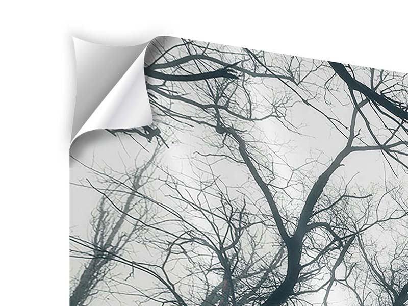 Klebeposter Mysteriöse Stimmung im Wald
